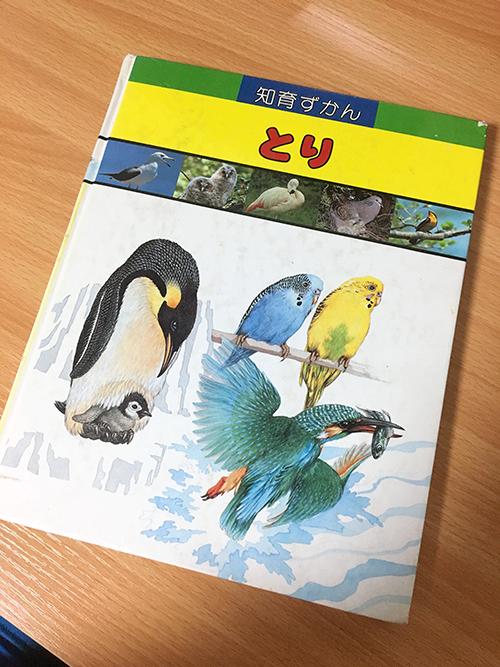 こども向け鳥図鑑