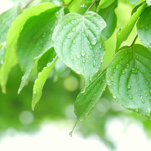 もうすぐ梅雨