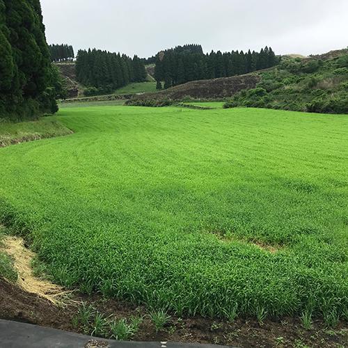 すごくきれいな畑